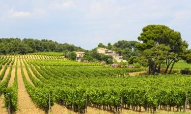 Fascinerende natur med bjerge og frodige vinmarker