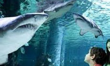 Forlystelsesparker og akvarium