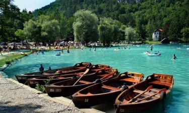 Natura wokół campingu Bled
