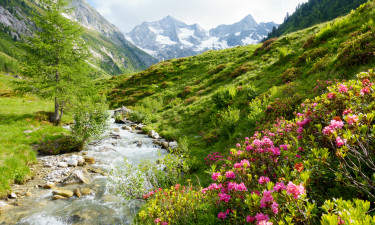 Omgivet af smuk natur