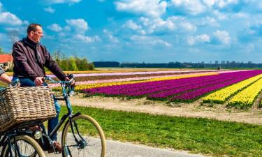 Tulipaner og atter tulipaner