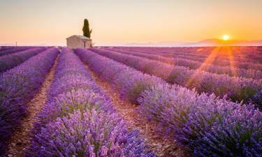 Et besøg i Provence