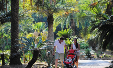 Camping Rosselba le Palme auf Elba