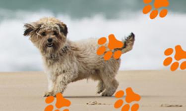 Pies, kemping i plaża