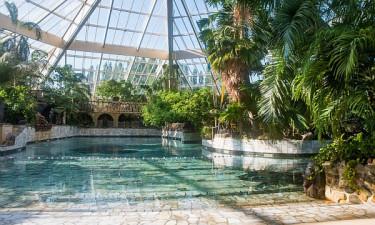 Tropisk badeland i alle Center Parcs