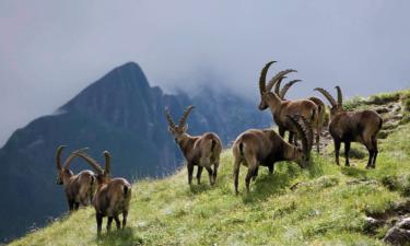 Látnivalók Tirolban - Kempingezés