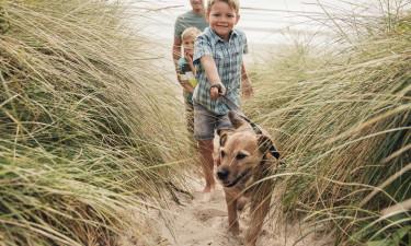 Tag hunden med på campingferie